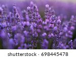 tenderness of lavender fields.... | Shutterstock . vector #698445478