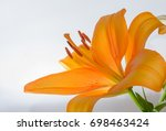 Orange Lily Isolated On White...