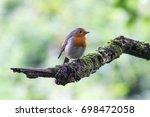 european robin  erithacus... | Shutterstock . vector #698472058