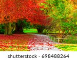 amazing golden autumn colors in ... | Shutterstock . vector #698488264