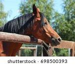 portrait of a beautiful arabian ... | Shutterstock . vector #698500393