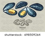 Mussel. Vector Illustration...