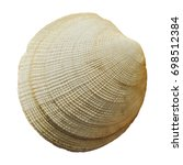 Small photo of Round seashell closely isolated on white background. Rough striped texture, aquatic animals, shellfish, crustacean. Macro nature photo for design, prints.