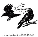 Vector Raven  Crow. White And...