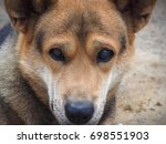 dog  brown and black color... | Shutterstock . vector #698551903