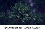 pine leaf background   Shutterstock . vector #698576284