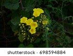wild flowers along the hiking... | Shutterstock . vector #698594884