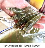 white shrimp. fresh.  catching... | Shutterstock . vector #698646904