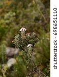 wild flowers in the iguaque... | Shutterstock . vector #698651110