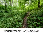 forest trees. nature green wood ... | Shutterstock . vector #698656360