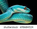 Blue viper closeup