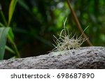 spanish moss clinging to a tree ... | Shutterstock . vector #698687890