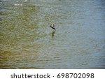 cormorant flying over the river | Shutterstock . vector #698702098