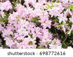 Background Of Pink Flowers...