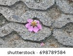Isolated Pink Flower Fallen On...