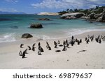 penguin colony at the beach in... | Shutterstock . vector #69879637