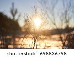 sunset in a sunny forest winter ... | Shutterstock . vector #698836798