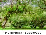 trees  at ang kang mountain ... | Shutterstock . vector #698889886