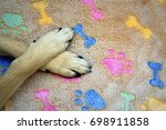 paws of a dog close up on a... | Shutterstock . vector #698911858