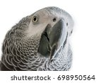 the grey parrot or african grey ... | Shutterstock . vector #698950564