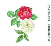 watercolor hand painted roses.... | Shutterstock . vector #698957920
