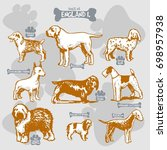 dogs breeds of the world vector