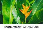 Stock photo tropical nature green leaf with yellow flower in garden ecology and environment concept vintage 698963908
