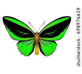 vector drawing green butterfly | Shutterstock .eps vector #698976619