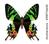 vector drawing green butterfly | Shutterstock .eps vector #698976640
