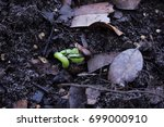 stages of seed emerging  | Shutterstock . vector #699000910