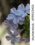mediterranean vegetation | Shutterstock . vector #699015403