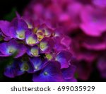 soft beauty of a vibrant... | Shutterstock . vector #699035929