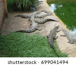 baby crocs relaxing by the... | Shutterstock . vector #699041494