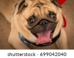 funny face of pug dog in... | Shutterstock . vector #699042040