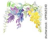 the wisteria flower vine...   Shutterstock . vector #699065140