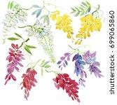 watercolor wisteria. set of... | Shutterstock . vector #699065860