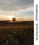 Small photo of Sunset flower / prairie