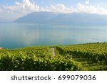 a vineyard by the lake in evian ... | Shutterstock . vector #699079036