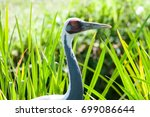 Small photo of White naped crane