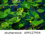 everglades national park.... | Shutterstock . vector #699127954