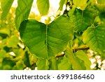 pho tree leaf.select  spot focus | Shutterstock . vector #699186460