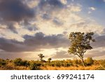 african landscape with dramatic ... | Shutterstock . vector #699241174