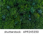 Small photo of Aerial Trees