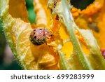 ladybug on grass | Shutterstock . vector #699283999
