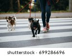Stock photo dog walker crossing a street with dogs 699286696