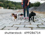 Stock photo dog walker with dogs enjoying outdoors 699286714