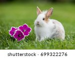little rabbit with flowers | Shutterstock . vector #699322276