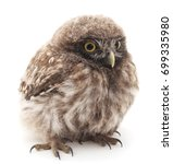 Stock photo young owl isolated on a white background 699335980