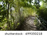 forest path with shadows | Shutterstock . vector #699350218