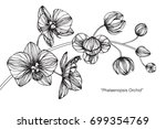 hand drawn and sketch fuchsia... | Shutterstock .eps vector #699354769
